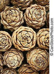Background of brown cedar cones with resin