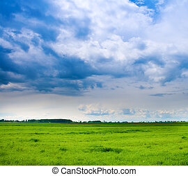 Background of cloudy sky and fresh green grass