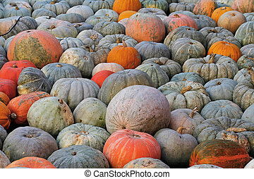 Background of colorful pumpkins at autumn festival