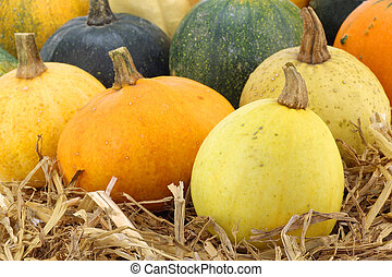 background of colorful pumpkins