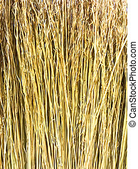 Background of dried plant branches