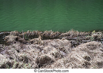 Background of dry grass and green lake