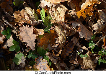 Background of dry leaves lit by the sun in the autumn forest