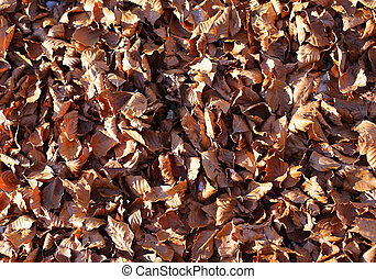 background of fall leaves in autumn