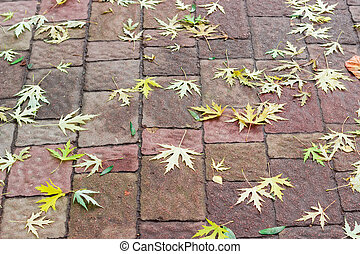 Background of fallen maple leaves on a footway