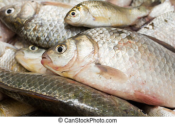 background of fish