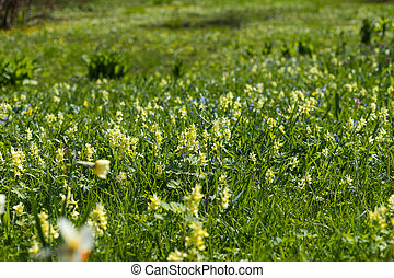 Background of Flowers Field. Landscape with daisies , flowers in Sunny weather in summer. Wildflowers. Many small bright white ,yellow and blue flowers in a spring field. meadow and wildflower. field blooming