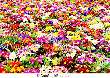 Background of flowers
