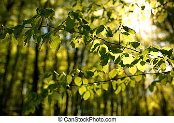 Background of forest nature, green leaves in sunlight