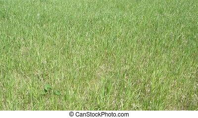 background of fresh green grass.