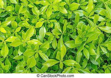 background of fresh spring green grass