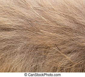 background of fur, close-up
