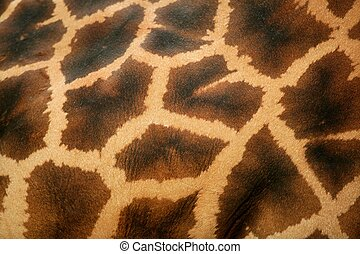 Background of giraffe skin pattern macro