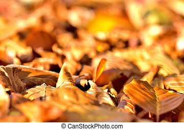 Background of golden autumn fallen leaves on ground.
