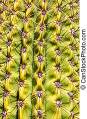 Background of green cactus close up