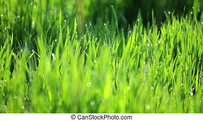 background of green gras panning camera - background of...