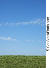 background of green grass and blue sky
