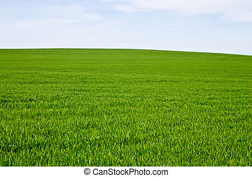 Background of green grass and sky