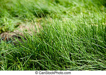 Background of green grass high