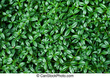 background of green leaves - background of green fresh...
