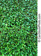 Background of green leaves.