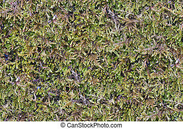 Background Of Green Moss. Seamless Tileable Texture.