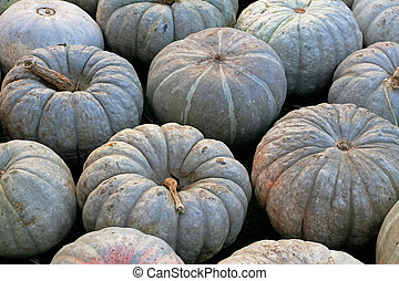 Background of green pumpkins at autumn festival
