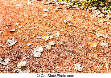 Background of jogging track