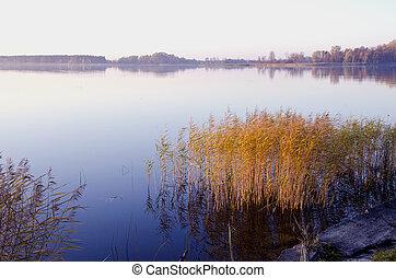 Background of lake evening landscape. Bulrush grow