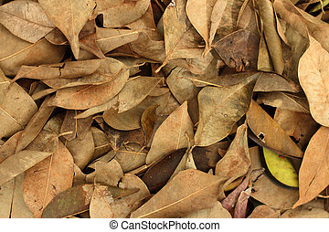 Background of leaves in the nature