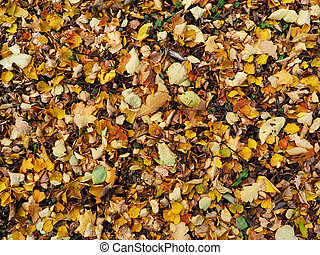 background of leaves on the ground