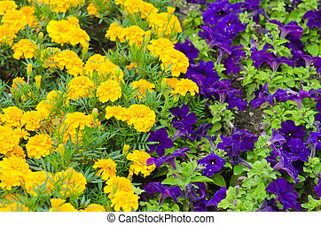 Background of multicolored flowers in summer