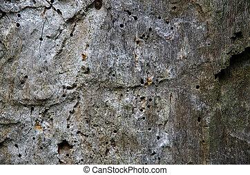 Background of old oak tree