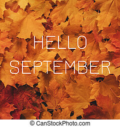 Background of orange maple leaves with a congratulatory inscription Hello September
