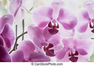 background of orchid flowers