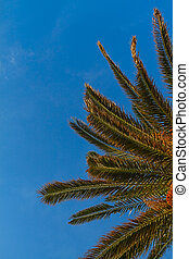 Background of palm tree and palm leafs against the blue sky