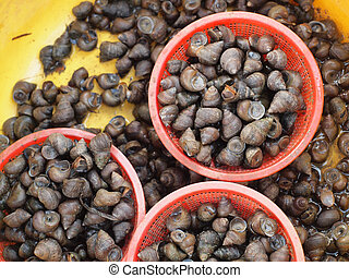 background of periwinkles