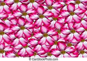 Background of pink flower