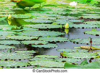 Background of pool with waterlilly from nature park.