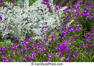 background of purple small flowers and white leaves