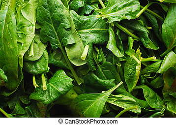 spinach - Background of raw spinach leaves
