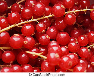 background of red berries in closeup .