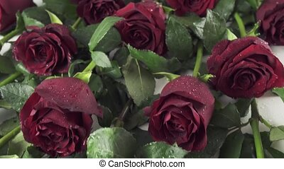 Background of red roses with water drops