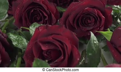 Background of red roses with water drops slow motion stock footage video
