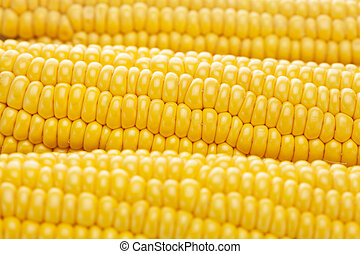 background of ripe yellow corn