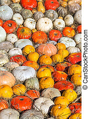 Background of round colorful pumpkins