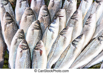 Background of sea fish close-up on the market in the port