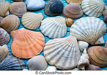 Background of sea shells on a wooden blue table