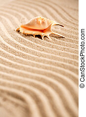 Background of seashell on sand. Wavy sand texture with place for text.