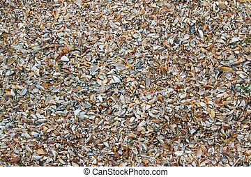Background of seashells. Summer beach background.